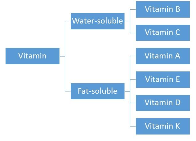 Phân loại các vitamin tan trong nước, hay trong chất béo, vitamin, water soluble, fat soluble, vitamin A, vitamin E, vitamin D, vitamin K, vitamin B, vitamin C